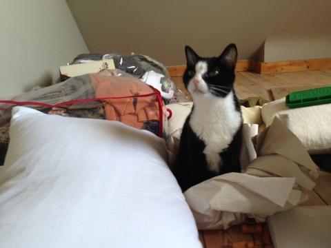 Prune helping to unpack.